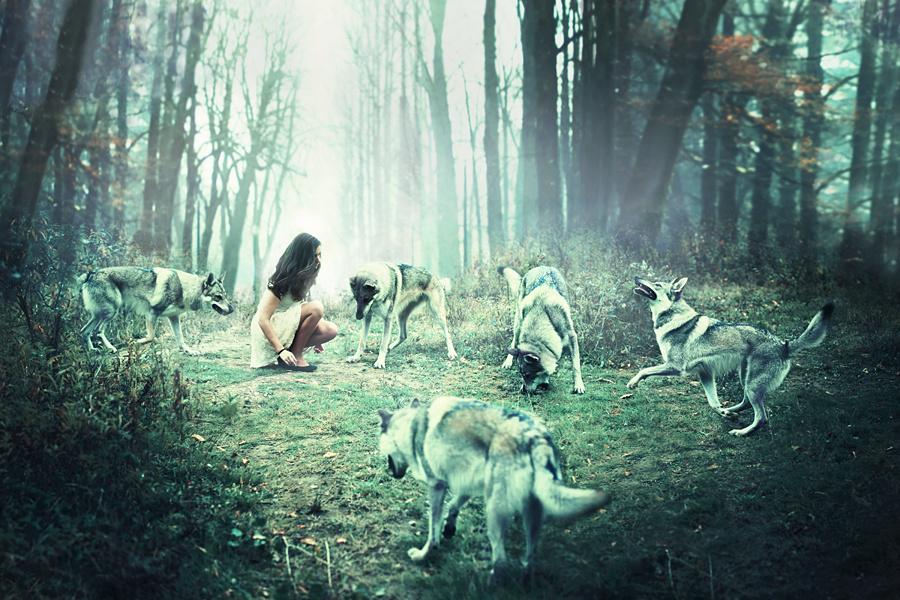 Danses avec les loups