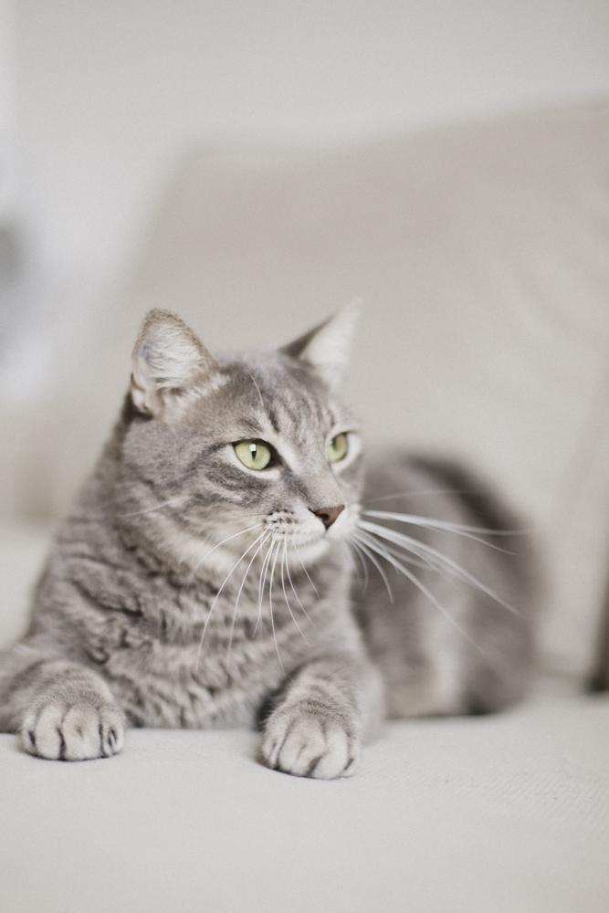 photos de chat