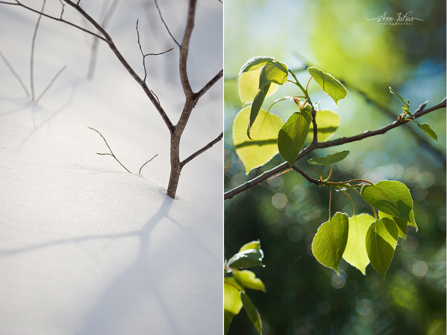 Photo de paysage : quel type de lumière favoriser |  Contre-jour