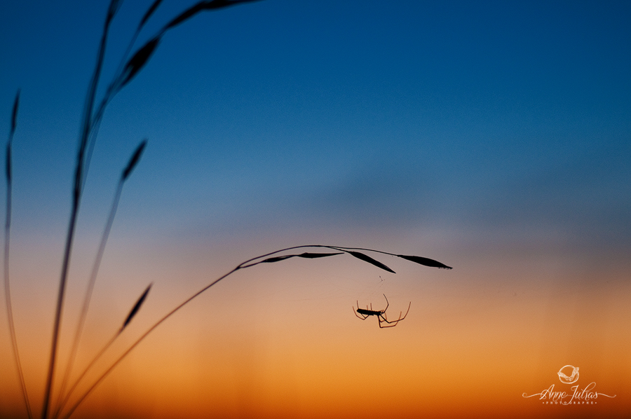 Photo de paysage : quel type de lumière favoriser  Contre jour