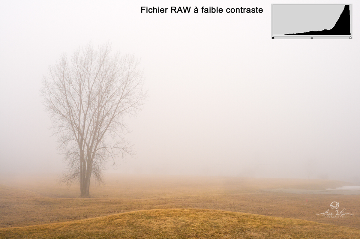 Fichier RAW faible contraste