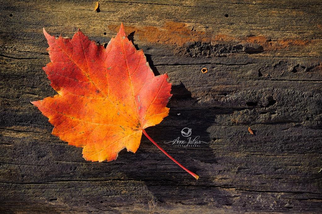 Photo d'une feuille orange en automne