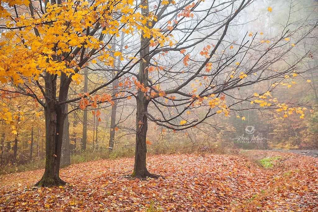 Profiter de la brume pour photographier l'automne
