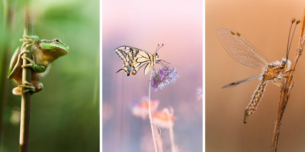 tuto photo macro animalière et insecte